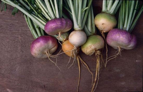 Improved Varieties of Shalgam