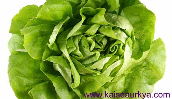 Salad (Lettuce) Ki Kheti Kaise Kare