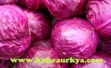 Lal Patta Gobhi (Red Cabbage) Ki Kheti
