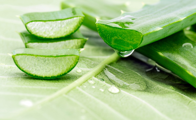 ग्वारपाठा के उपयोग और फायदे Benefits of Aloe Vera Juice In Hindi - Uses and Side Effects