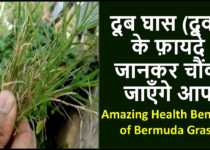 doob grass benefits in hindi