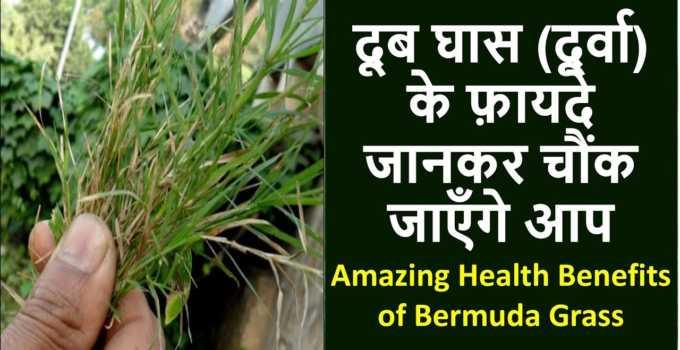 doob grass benefits in hindi