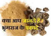 bhringraj benefits in hindi