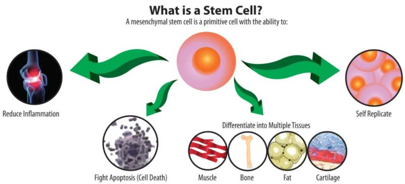 stem cell preservation benefits in india hindi