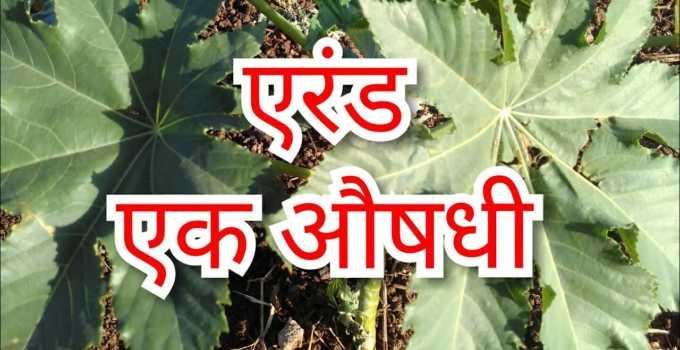 arand ke fayde हिंदी में