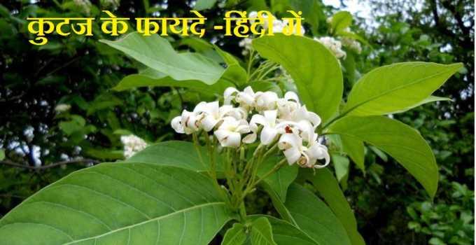 kutaj ke fayde in hindi