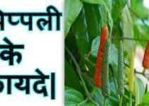 Pippli Ke Benefits In Hindi